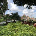 Five Reasons Why You Should Choose Disney's Polynesian Resort