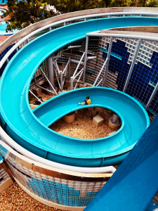Disney's Bay Lake Tower Pool Slide Orlando Florida